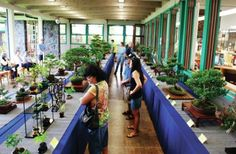 HOLLYN JOHNSON/Tribune-Herald The Ohana Lehua Bonsai Club show stretches the width of the Hilo Public Library with statuesque, shapely and colorful plants Saturday afternoon. The club also held workshops and demonstrations throughout the day.