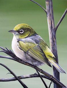 Drawing Birds, Bird Drawings, Nz Art, Different Birds, Bird Paintings, Ab Fab, Blue Tit, Animal Portraits, Wild Nature
