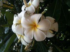 my ultimate favorite flower