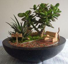 Mini jardim de Suculentas.