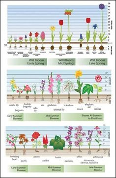 time charts for fall-planted bulbs, spring-planted bulbs and perennials. Bloom time charts for fall-planted bulbs, spring-planted bulbs and perennials. Bloom time charts for fall-planted bulbs, spring-planted bulbs and perennials. Cut Flower Garden, Flower Gardening, Flower Garden Plans, Flower Garden Design, Flower Bed Designs, Tulips Garden, Perennial Garden Plans, Flower Farm, Fall Planting Flowers