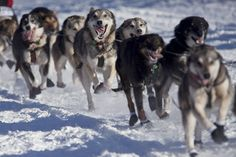 yukon Quest Trail Map - Google Search