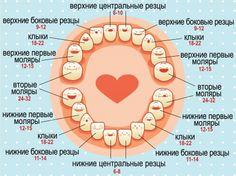 Режутся первые зубки: симптомы. Какие зубы режутся первыми? Чем помочь малышу, у которого начинают резаться первые зубы. | Woman.ru