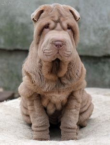 Shar Pei - Qi Ming Xing Element Of Surprise
