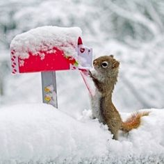 Squirrel mailing Valentine in the snow.