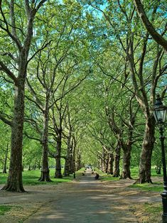 Green Park, where some of the trees are so old and huge, that you could hide behind one.