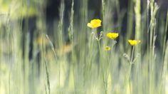 Vanmiddag op Landgoed Roggebotstaete, moving landscapes, moving flowers