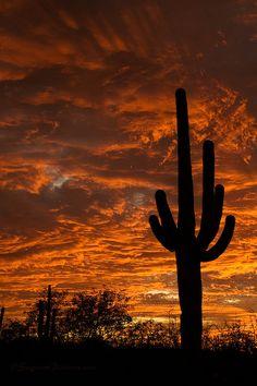 Saguaro National Park, Arizona; photo by Greg McCown