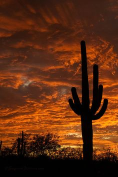 Saguaro National Park, Arizona; photo by Greg McCown