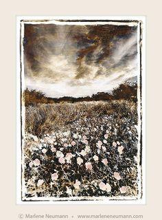 African Landscape - Grasslands - Marlene Neumann Fine Art Photography  www.marleneneumann.com  neumann@worldonline.co.za  Perfect for Home/Office Decor & Unique Gifts Home Office Decor, Fine Art Photography, Unique Gifts, Landscapes, African, Black And White, Painting, Inspiration, Image