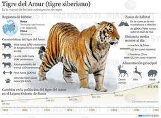 infografías animales amenazados - Google Search