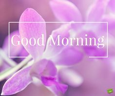 Good Morning image with purple flowers