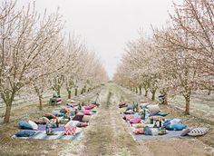 Almond orchard wedding with pillow seating