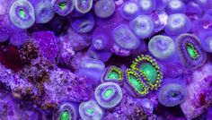 Beautiful timelapse video captures sea creatures in slow motion » Lost At E Minor: For creative people