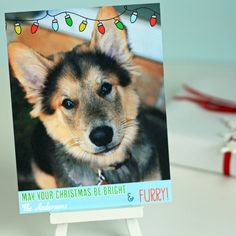 Custom Dog Holiday Photo Card - Christmas Lights Set of 25. $63.00, via Etsy.