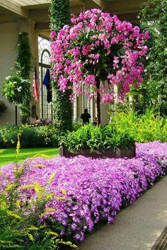Water Garden, Lawn And Garden, Garden Pots, Beautiful Gardens, Beautiful Flowers, Arbors Trellis, Patio Plants, Container Flowers, Dream Garden