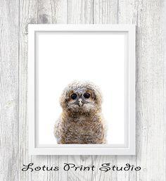 Owl Print Nursery Decor Baby Animal Wall Art Kids Room