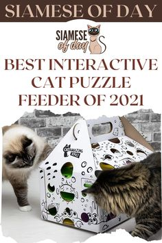 Cats are intrinsic hunters and have not evolved to find food in the same place at the same time every day. They relish the challenge of figuring out how to hunt and get food on their own. #siamese #siameseofday #cats #pets #kittens #Blog #cattips #cathealth #kitten #justcats Cat Puzzle Feeder, Cat Feeder, Find Food, Kitten Care, Cat Health, Siamese, Hunters, Kittens, Challenge