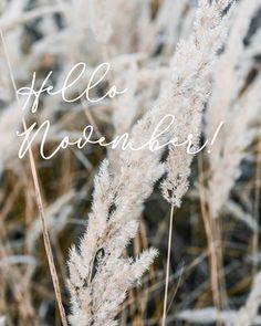 Hellooo November!🌾 Lassan itt vannak az ünnepek és mi már szuper izgatottak vagyunk! ✨ Dandelion, November, Marvel, Flowers, Plants, November Born, Dandelions, Plant, Taraxacum Officinale