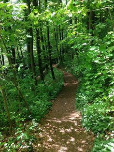 Trail Hohenems. Foto@Tschola