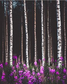 Summer in Finland. Photo by Janni Laakso. Picking Wild Flowers, Finland Summer, Jungle Tree, Forest Flowers, Spring Landscape, Tree Leaves, Wonderful Images, Four Seasons, Beautiful Places