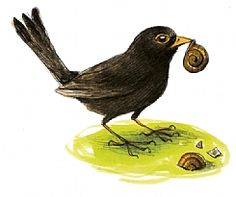 Vogels tellen dit weekend 19 & 20 januari 2013...