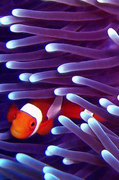 La abundante vida silvestre en la Gran Barrera de Coral. | 34 razones por las que Australia es el lugar más hermoso en la tierra