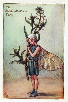 Shepherds-Purse Flower Fairy Vintage Print by Cicely Mary Barker,  first published in London by Blackie, 1923 in Flower Fairies of the Spring.