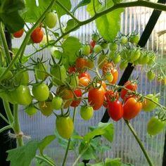 Hekkplanter for enhver smak, her er mine forslag. Slik, Planters, Stuffed Peppers, Vegetables, Gardening, Garden Ideas, Outdoors, Food, Stuffed Pepper