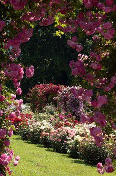 Im Rosenneuheitengarten Baden-Baden wird immer im Sommer die Rose des Jahres gekürt. Von hier hat man einen wunderbaren Blick über die Stadt. www.hotel-am-sophienpark.de