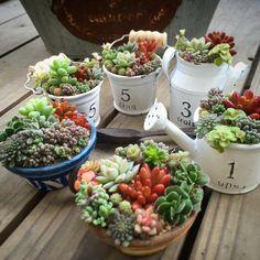 小さな庭の画像 by 39_mi_farmさん   小さな庭と多肉植物の寄せ植えアイデアコンテストと多肉植物