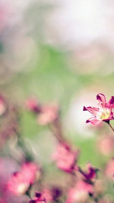Nature Field Pink Flowers Bokeh #iPhone #5s #wallpaper