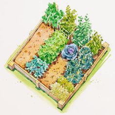 Get this free garden plan and get a head start on your summer vegetable garden. Find out exactly what seeds and plants you need to buy to plant in a vegetable bed or raised garden bed. These plants all thrive in warm soil and full sun.
