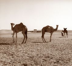 It seldom rains in the desert.    砂漠ではほとんど雨が降らない。