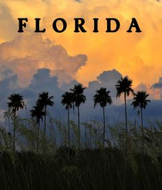 Florida Poster... by David Lee Thompson