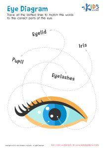 Parts of the Eye - Free Science Worksheet #kids #preschool ...