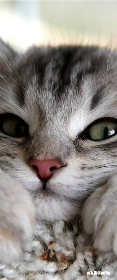 .Sweet kitty.
