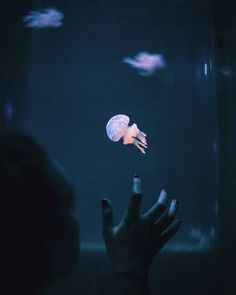 Por fin he podido ir a un acuario decente y hacer alguna foto interesante. Espero que os gusten pronto más! :)  ______________________________ TAGS: #artofvisuals #agameoftones #vscocam #ftwotw #quietthechaos #bleachmyfilm #engravemyphoto #featuremeval #forestfeatures #cooloceann #oceanmurmurs #chasingsouls #instagrames #tangledinfilm #cominityfirst #hallazgosemanal #primerolacomunidad #createexplore #visualsoflife #illgrammers #expofilm #rainbowfeatures #featurepalette #way2ill
