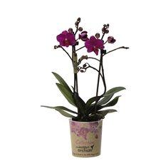 Little kolibri orchid 2tak america Accounting, Business Accounting