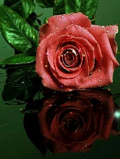 Сверкающая роза