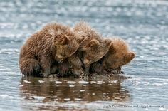 National WIldife Photo Contest winners 3 Bear cubs