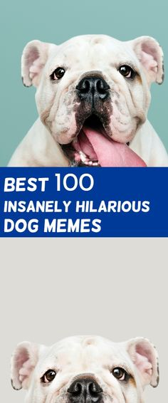 Dog Memes clean Do you love Dogs? Well you will surely enjoy these super hilarious latest funny memes about dogs, make sure to share the Funny Dog Memes, Memes Humor, Hilarious Jokes, Funny Sarcastic, Funny Quotes, Art Quotes, Dog Memes Clean, Funny Clean, Memes About Guys