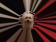 My doggy ❤️❤️❤️