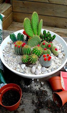 DIY home made cactus mini garden by emaniadesign