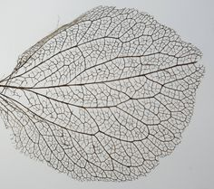 Leaf Leave In, Leaf Structure, Natural Structures, Photoshop Projects, A Level Art, Painted Leaves, Leaf Art, Daily Photo, Stargazing
