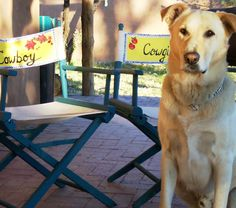 Horse Ranch Main House - Studio chairs to match the trim of the 100 year old adobe house exterior - then painted the fabric backs, one says 'cowboy,' the other, 'cowgirl'.  That is my wonderdog Christopher, aka   Critter.  He is half lab and half great dane.