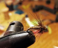 brown soft hackle ma