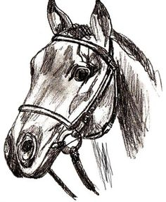 Horse's Head Drawing