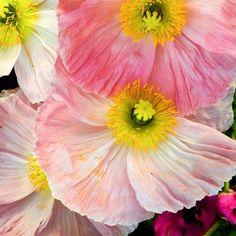 flowersofvisalia