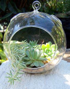 Hanging Terrarium with Succulents DIY Medium size Glass globe Wedding Centerpieces A. $23.00, via Etsy.